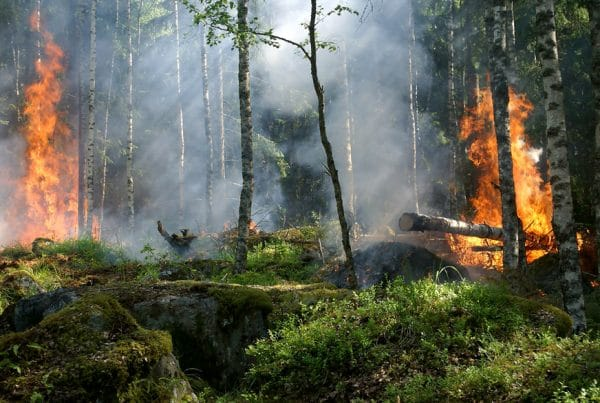 incendios-australia-impactos-turismo_destaque